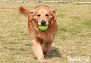 合理的运动对狗狗健康有好处-成犬饲养